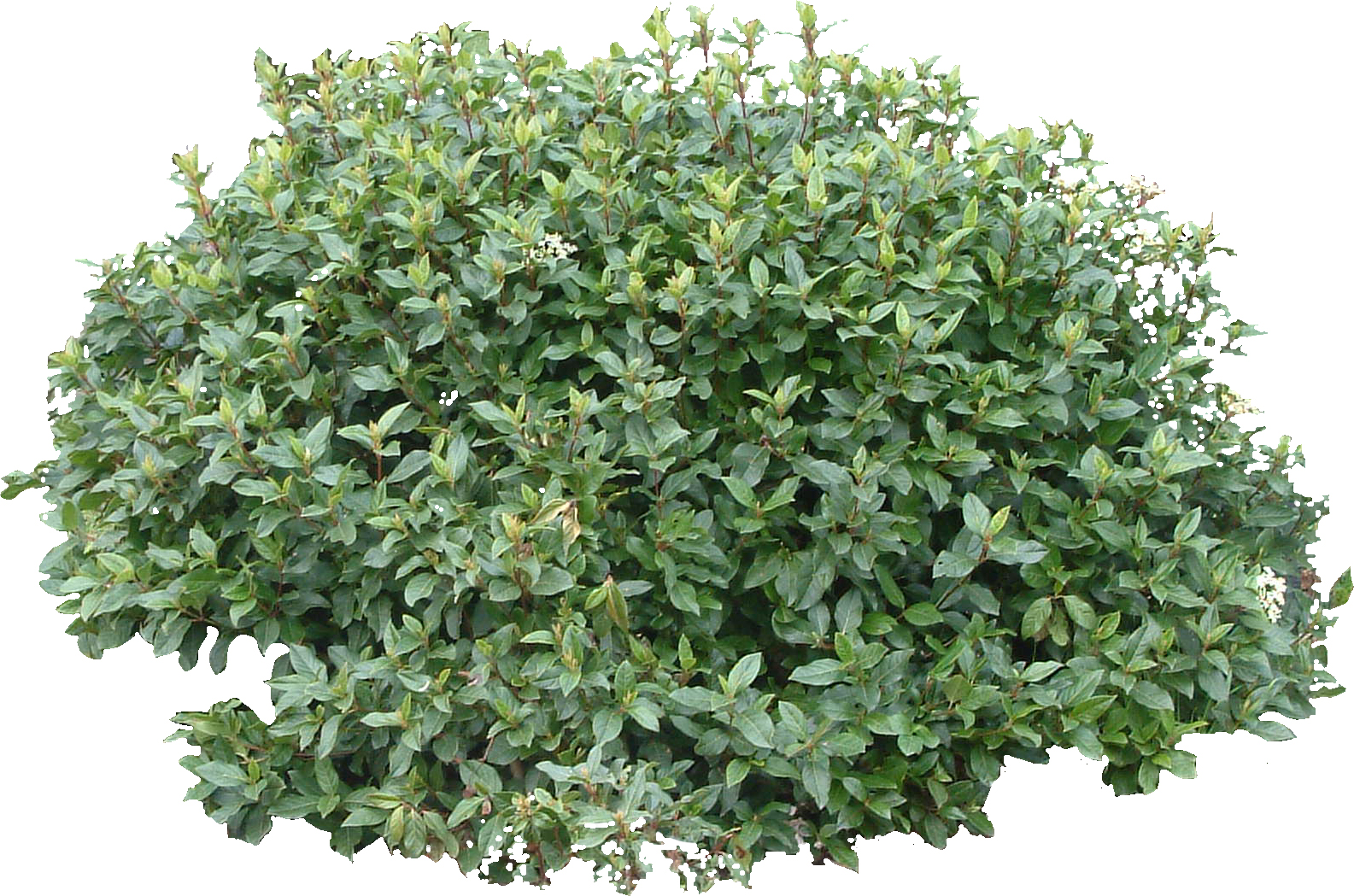 bush tree sylvan